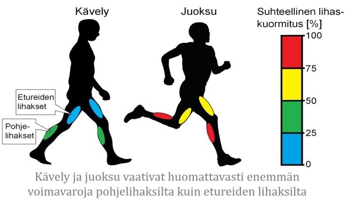 suhtellinen__lihaskuormitus_kavely_juoksu